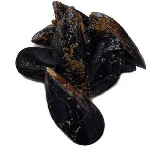 mejillonmejillón-mariscos-gallego