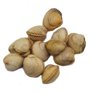 berberecho-mariscos-gallego