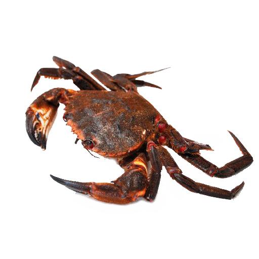 necora-mariscos-gallego