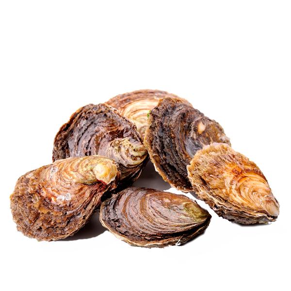 ostras-mariscos-gallego