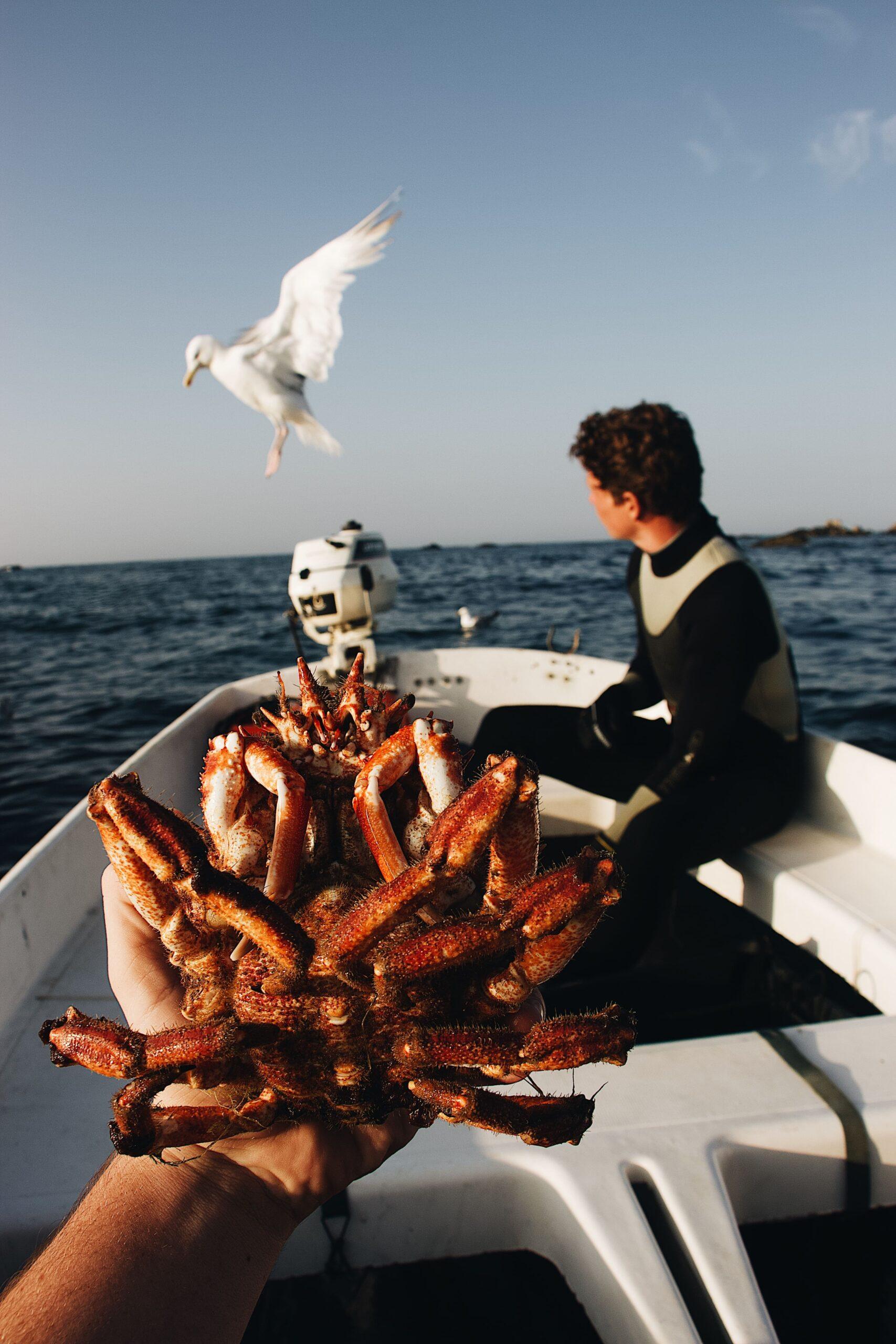 Centolla gallega, la deseada, marisco de galicia
