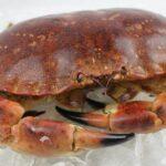 buey de mar gallego fresco o cocido venta online
