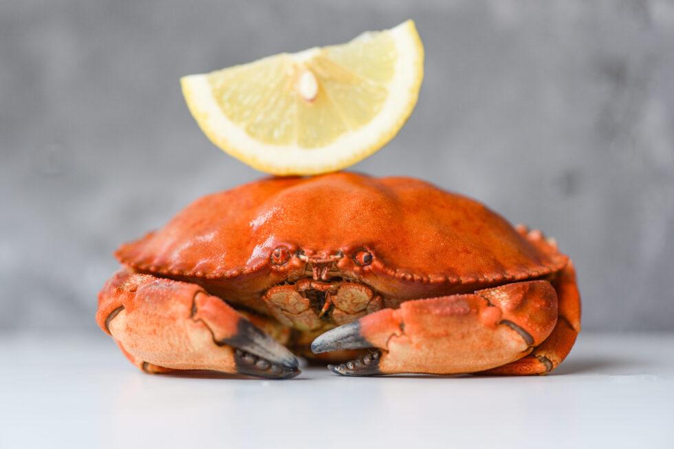 El buey de mar es el rey de los cangrejos, por eso lo usamos para este salpicón de buey