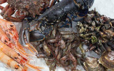Cómo abrir marisco: Guía fácil de supervivencia