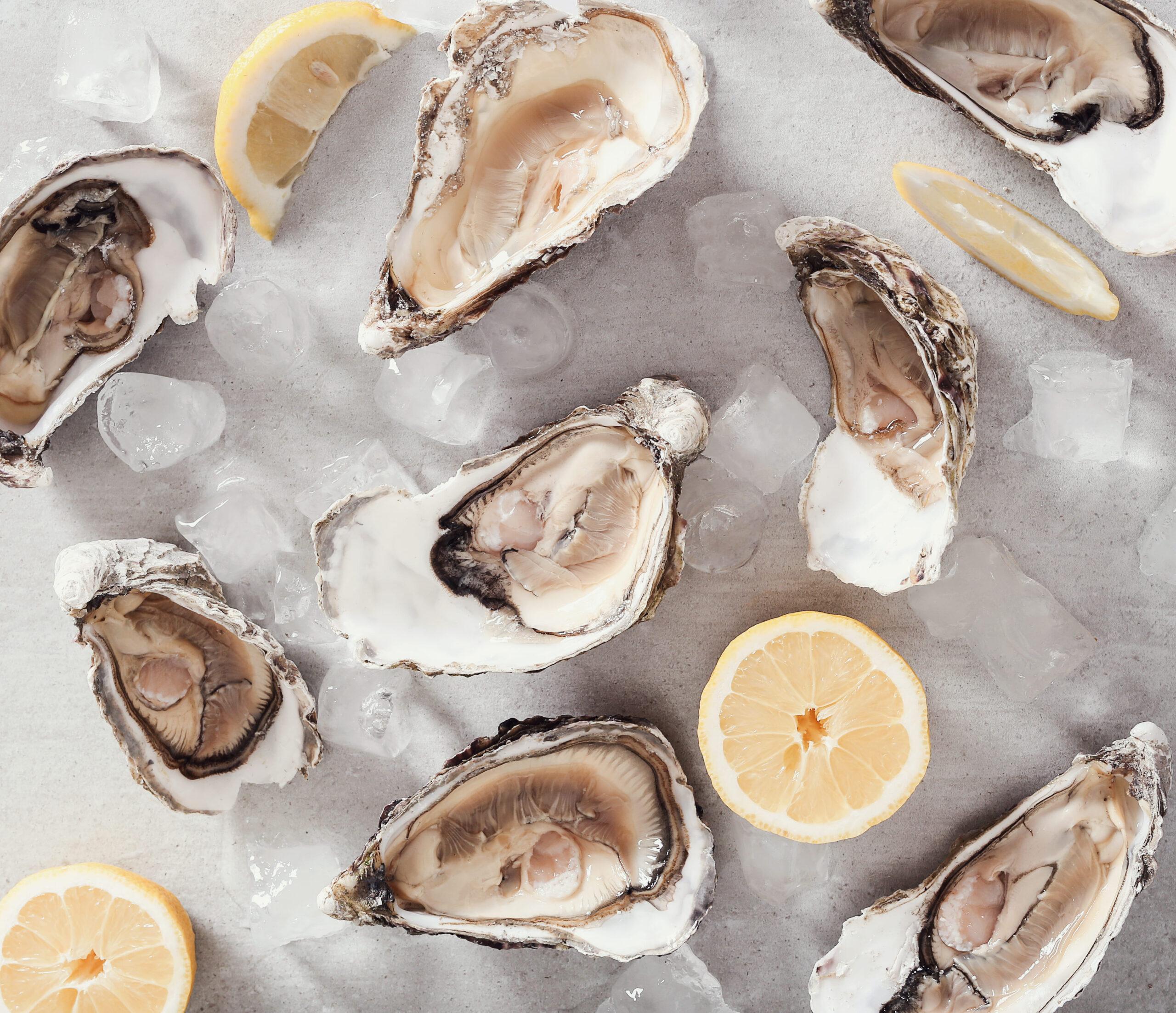 el zinc de las ostras ayuda al cerebro a funcionar correctamente