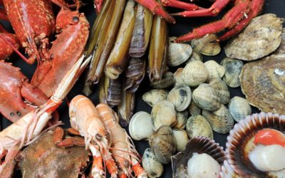 ¿Cómo comer marisco?